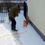 Pier met hond Züt in de sneeuw